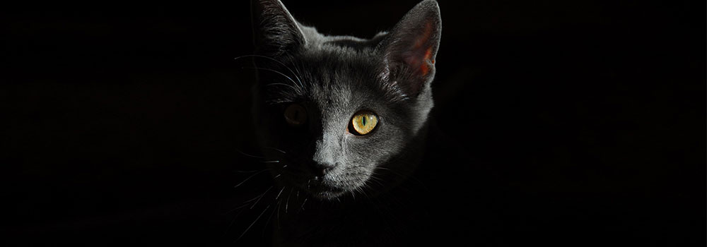 黒のイメージ